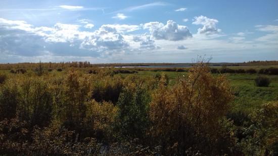 3. Инкинские болота.jpg