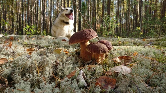 8. ... и собака Баскервиллей.jpg
